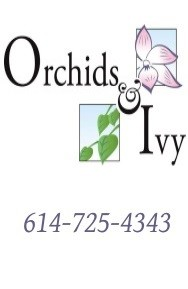 Orchids & Ivy Flowers & Gifts