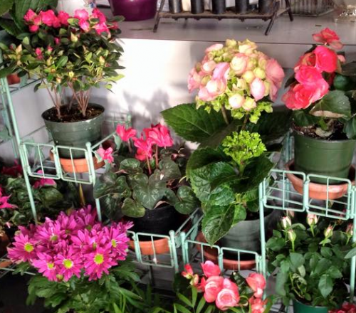 We're a local Mount Prospect, IL florist delivering courteous, professional service and the highest quality floral and gift items around.