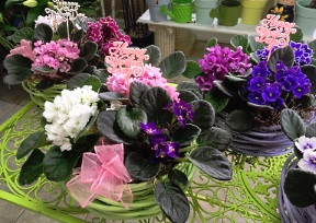 About us thimbleberry lane oshawa on choose from our nice selection of green plants blooming plants dish gardens potted mum plants african violets fruit baskets gourmet baskets gift negle Choice Image