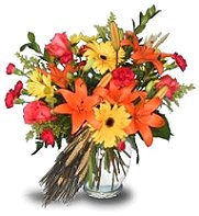 About us a petal for your thoughts spring hill tn were a local spring hill tennessee florist delivering courteous professional service and the highest quality floral and gift items around mightylinksfo